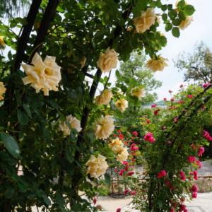 風水でお洒落な東南玄関*ラッキー玄関だから花と緑で目一杯の幸せを呼び込む!