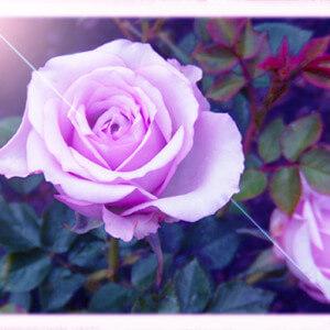 「パープル・カラー(紫)のお財布」でお金の居心地を高め金運アップ!*風水金運財布 8