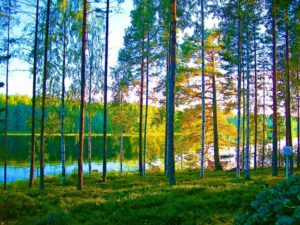 フィンランド湖畔
