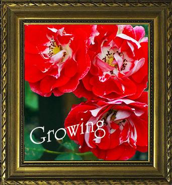 【開運絵画カラー風水*東方位】夢を叶えるため「行動できる自分」を創り出し成長する!