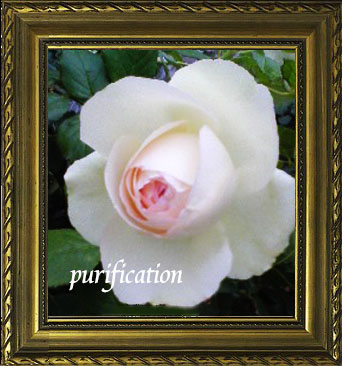 浄化(白いバラ)
